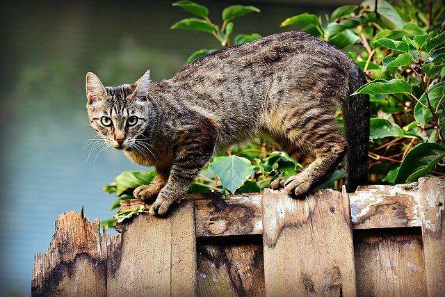 Asal Usul Kucing Mix Dome Di Indonesia Di 2020 Kucing Himalaya Sejarah