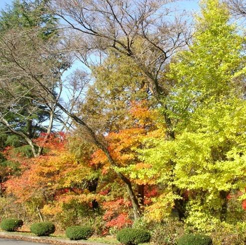色とりどりに染まる秋の紅葉