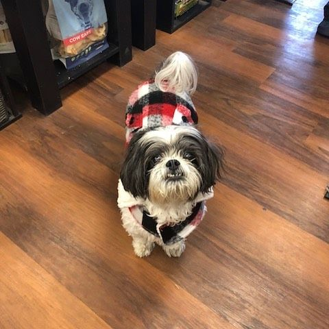 Cutecustomeralert Max Stopped By To Celebrate His 14th Birthday And Pick Out A New Jacket Pet Valu 14th Birthday Pets Celebrities