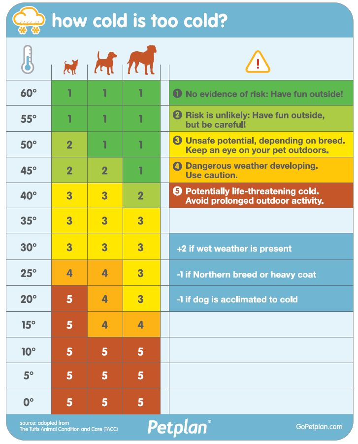 how cold is too cold for your dog use this handy chart to