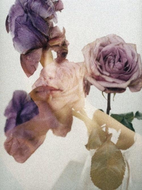 mel bles: Ble Mel, Rose, Double Exposure, Inspiration, Art, Flowers, Photography, Floral, Design