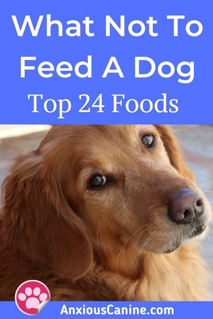 What Not To Feed Your Dog In 2020 Outdoor Dog Toys Dogs Tiny Dog Breeds