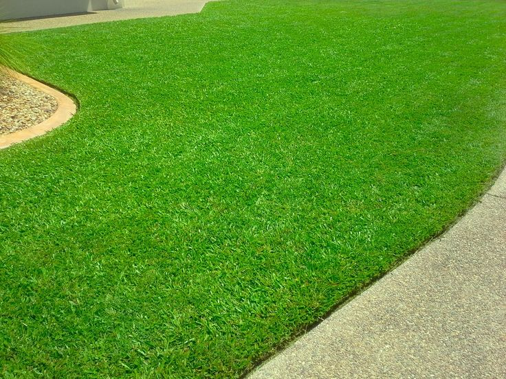 The most perfect lawn! would love this at home! (Caddies Mowing Townsville)