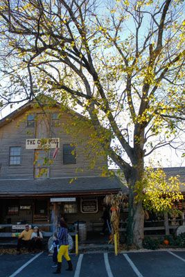 This tree in front of the General Store caught our eye.  It's a perfect complement to the yellow pants!