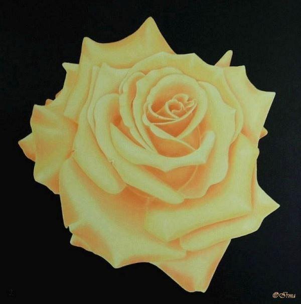 Irma Endrey: Peach rose; oil on canvas