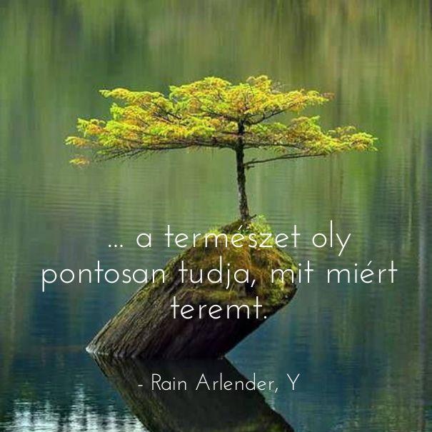 Természet teremt ekönyv szöveg Y Rain Arlender http://syllabux.hu/books/y?id=164