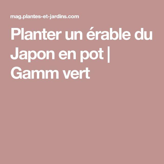 Planter un érable du Japon en pot   Gamm vert