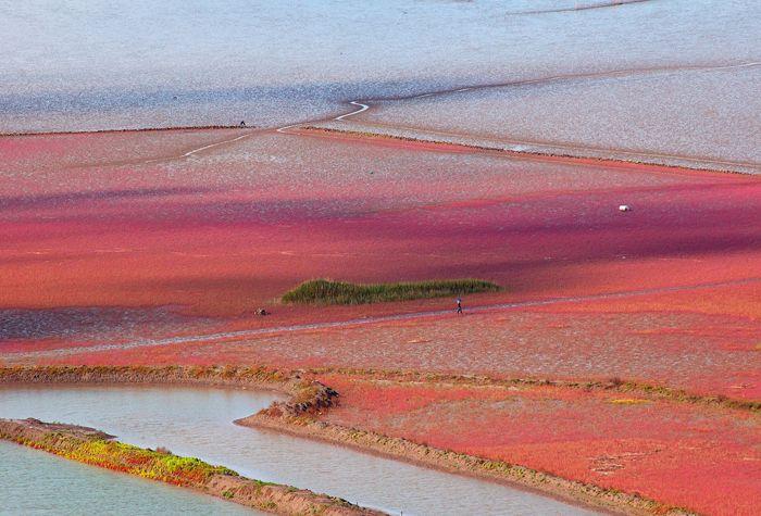 huge Korean mudflat in Sunchon Bay