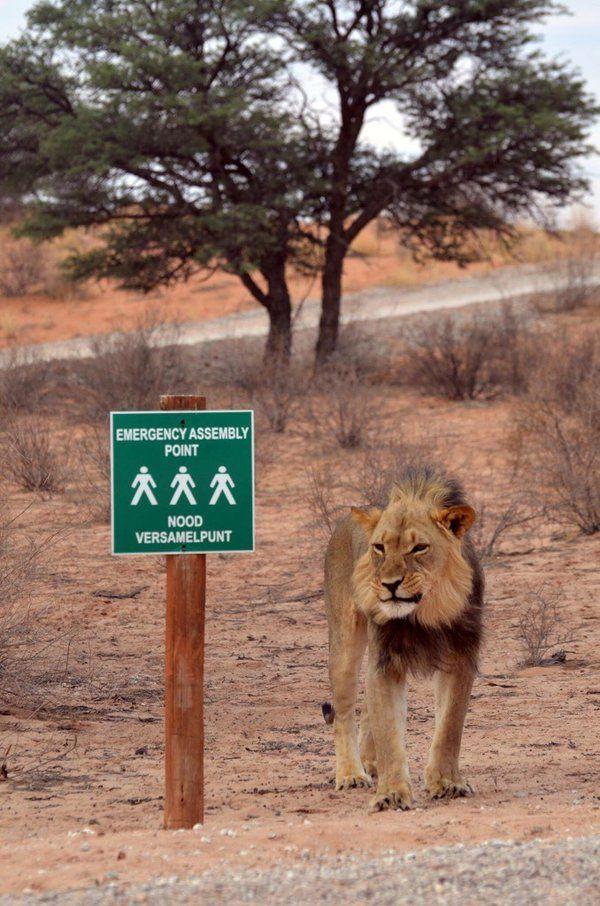 KGALAGADI PARK, SOUTH AFRIKA