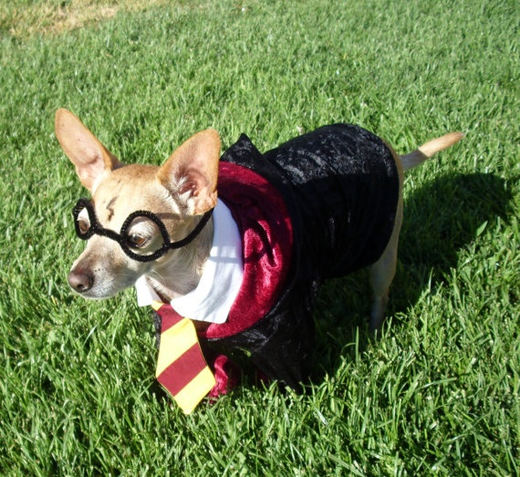 Harry Potter Dog Costume HAHAHAHA i am picturing Kane in this right now.