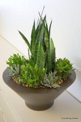 No Light Indoor Plant | Succulents for indoor plants