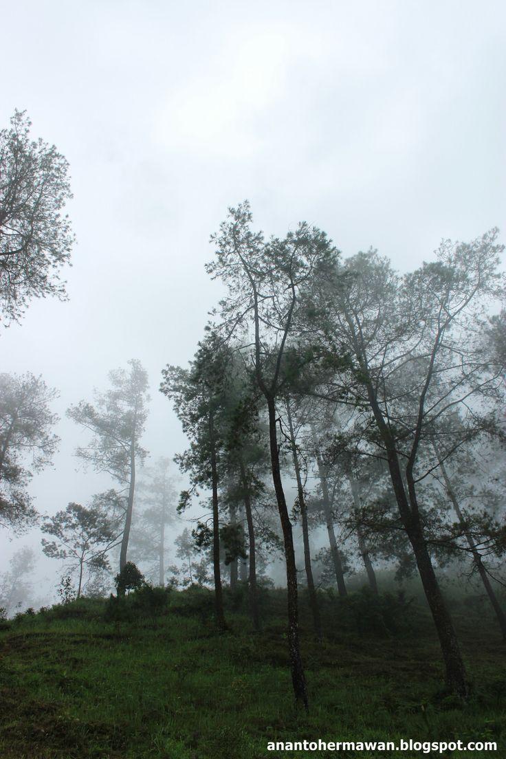 Cemorosewu Tree in Magetan - East Java