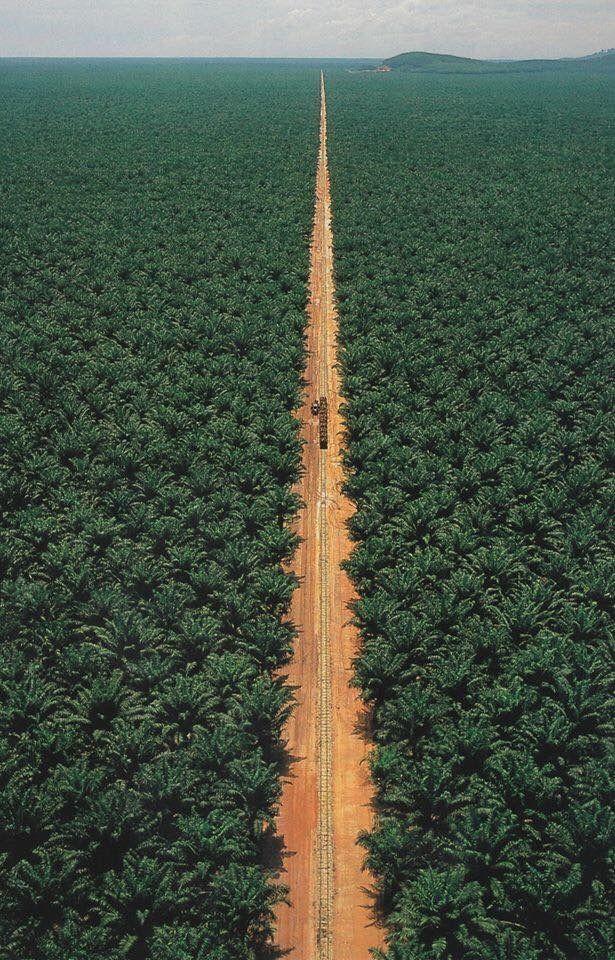 World's Largest Date Palm - Al Rajhi Garden in Qaseem, Saudi ...