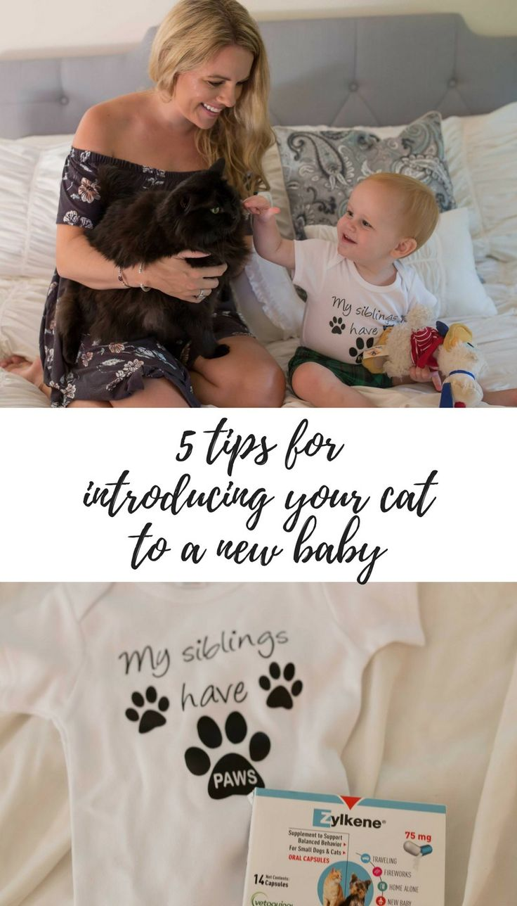 5 Tips for Introducing Your Cat to a New Baby by lifestyle blogger Casual Claire featuring Zylkene - which natural calms cats and dogs! #ZylkeneDifference #MyHappyPets #Sponsored