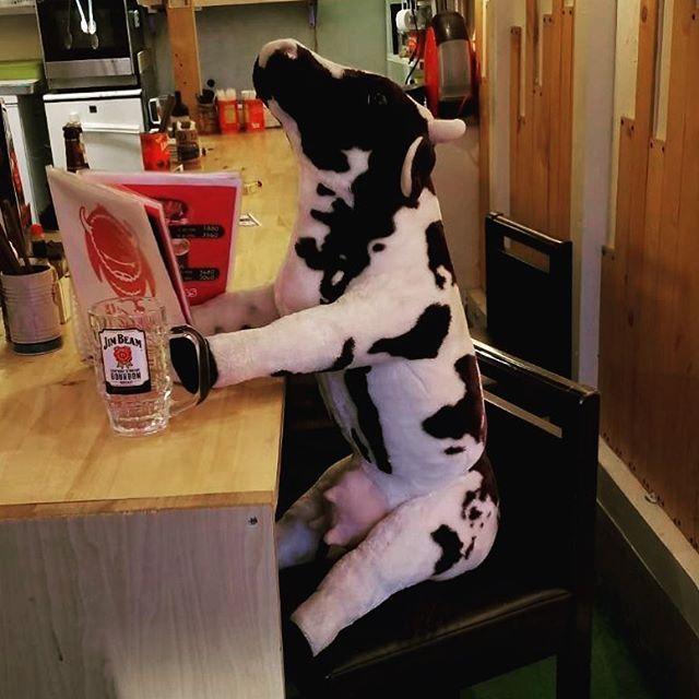 Have you ever tried A5 ranked Japanese beef? It's so good that even the cows are considering eating beef! A5の和牛は食べた事ありますか? 牛も食べたいぐらい美味しいですよー! バッファロー29 あべの店 ☎️06-6628-3558 大阪府大阪市阿倍野区松崎町2-3-62  https://tabelog.com/osaka/A2701/A270203/27094546/  天王寺⑨出口 徒歩1分 あべの橋出口 徒歩1分 ⏲ ランチ  11:30〜14:30  ディナー 18:00〜0:00  天王寺・あべのにある ステーキハウス!! 名物!!珍しい牛握り!マンガ肉! 前日予約で溶岩で焼肉もできます! 美味しいステーキを食べれるお店 バーカウンターもあるので一人焼肉にもピッタリ!カップルでもグループでもご家族でもご利用ください  #関西 #osaka #天王寺 #流行り #話題 #ステーキ #焼肉 #牛握り #寿司 #nigiri #wagyu #yakiniku…