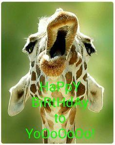 5975e83ff5722dfe604c7b7e607916c1 pictures of turtles animal pictures best 25 giraffe meme ideas on pinterest funny giraffe pictures,Giraffe Meme