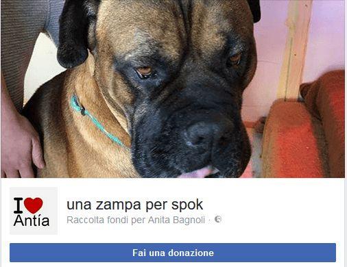 Una zampa per Spook, aiutami a respirare aiutami a vivere - Hormiga Adozioni cani gatti