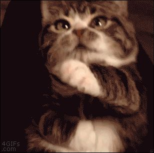 4gifs reblogged gifbro for this Tuimber post.  End text: Elfie the rescued dwarf cat. [via] Source:ForGIFs.com