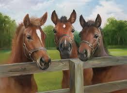 Afbeeldingsresultaat voor paarden