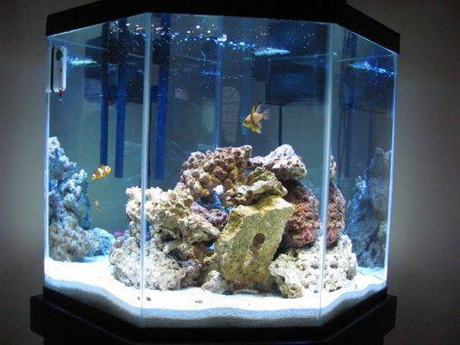 saltwater tank