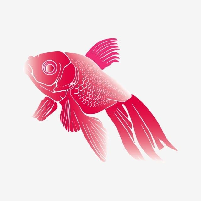 Illustration Of Koi Fish With A White Background Cute Fish Clipart Carp Fish Background Illustration Png And Vector With Transparent Background For Free Down Fish Illustration Fish Background Cute Fish