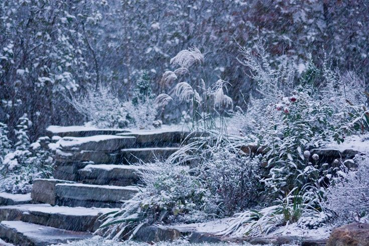 garden design with landscaping winter on pinterest winter garden winter and with garden pics - Home And Garden Channel