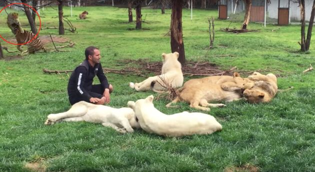 Eduardo Serio, who founded Mexico City's Black Jaguar White Tiger FoundatioWatch A Tiger Save His Handler From A Charging Leopard's Sneak Attack