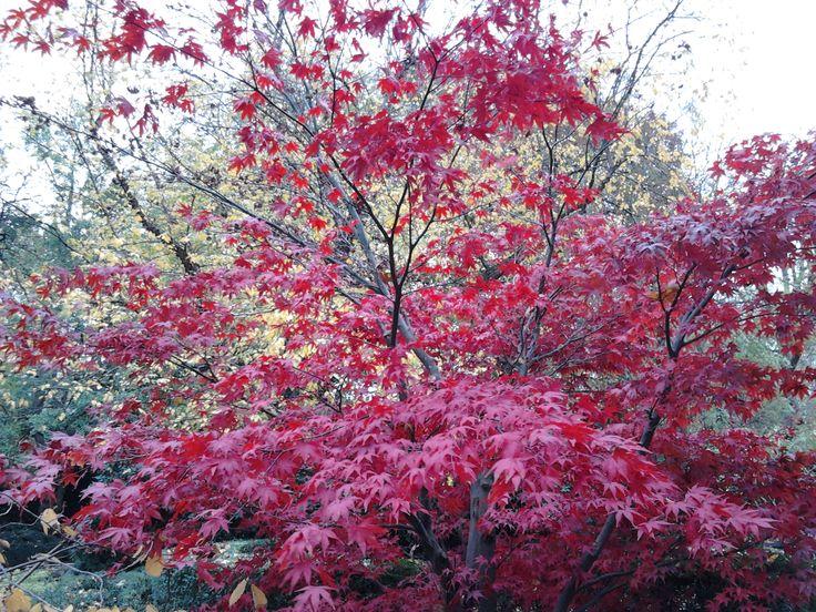 autumn colours in Artis