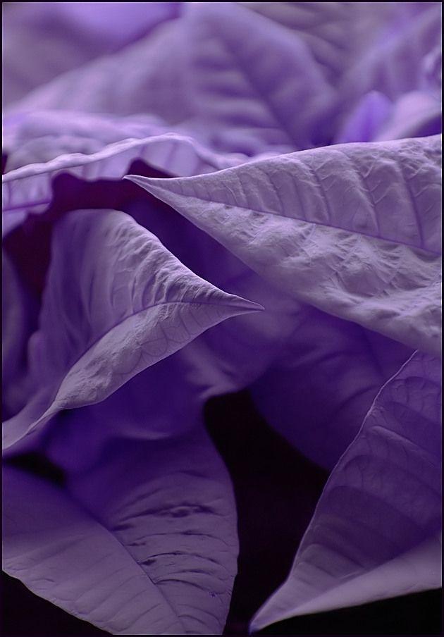 in purple mood