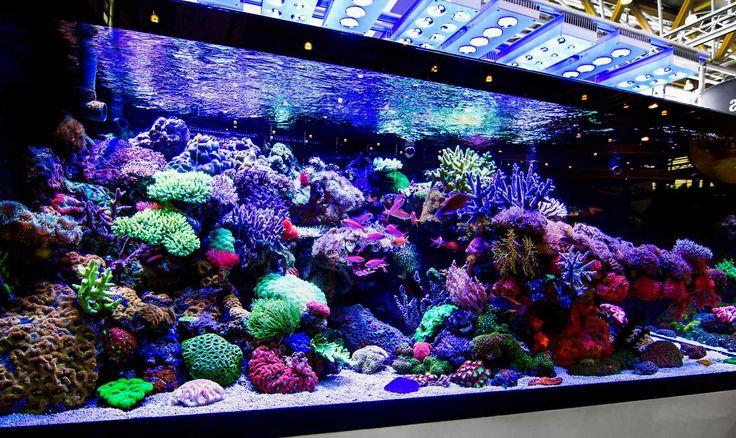 Zoutaquarium foto   Geen enkel aquarium is hetzelfde en vraagt zijn eigen specifieke wens  De