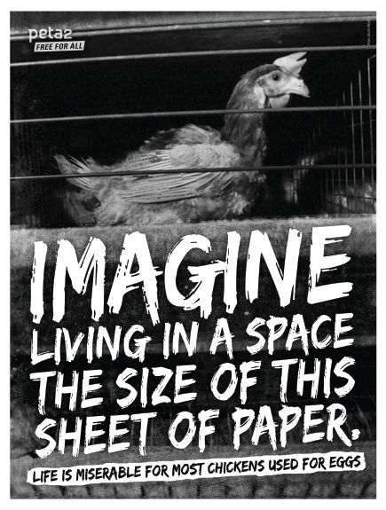 best images images factory farming animal hens in factory farms used for their eggs help us stop this brutality today