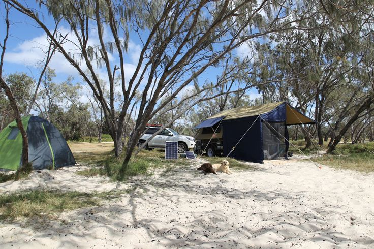 Camping On Stradbroke Island With Dogs