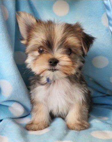 Top 10 Best Dog Breeds for First Time Dog Owners
