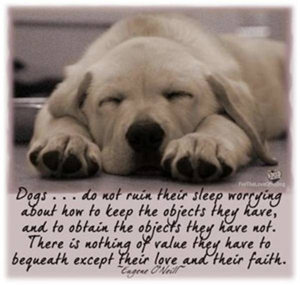 Pinterest Animal Quotes: 20 Best Dog Quotes Images On Pinterest
