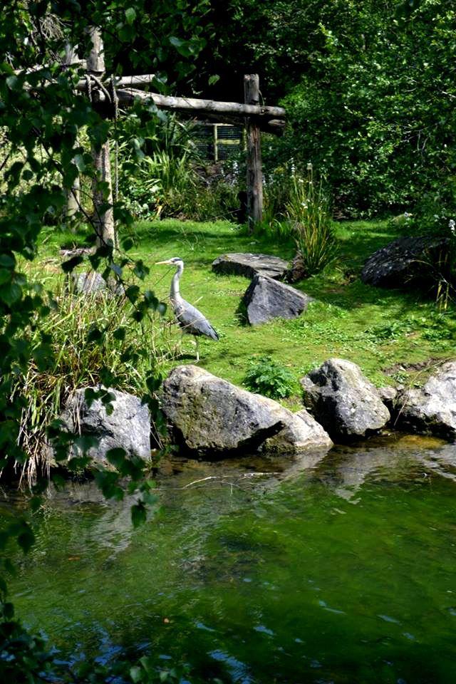 Photograph: The Crane Alone; Date: February 12, 2016; Location: Dublin Zoo, Phoenix Park, Dublin; Photographer: Jedd Cabreza Photography