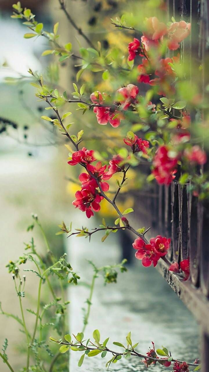 Find Millions Of Popular Wallpapers And Ringtones On Zedge And Personalize Your Phon Flowers Photography Wallpaper Red Flower Wallpaper Green Nature Wallpaper