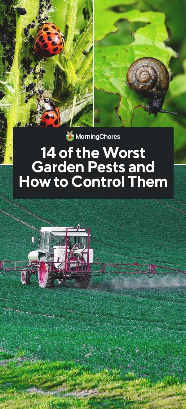 14 der schlimmsten Gartenschädlinge und wie man sie bekämpft