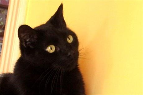 yellow eyes | Just Black Cats | Pinterest