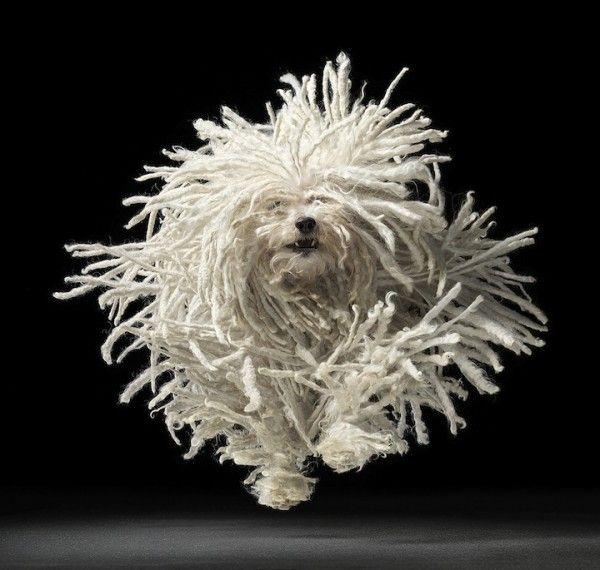 Tim Flach: Animals, Dogs, Timflach, Mop Dog, Pets, Tim Flach, Friend, Photography