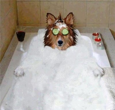 117 best dog grooming images on pinterest dog grooming dog this is dedicated to all the groomers who deserve a day to be recognized lets solutioingenieria Gallery
