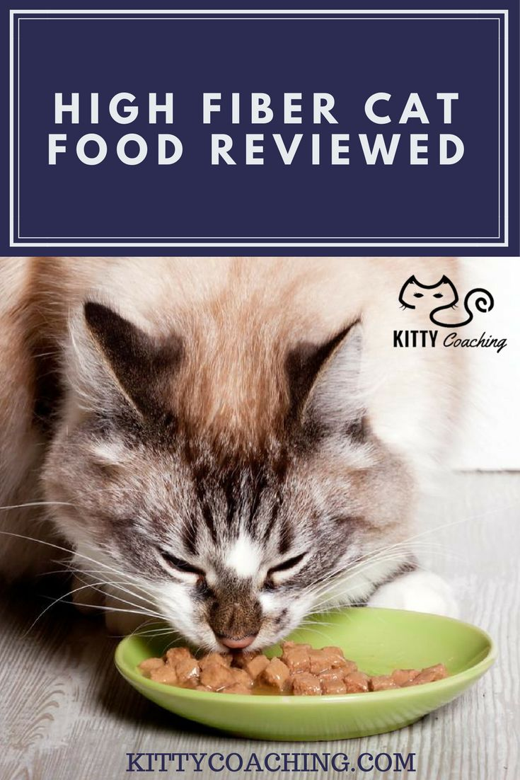 Some cats need high hiber food - here are reviews of the best. http://www.kittycoaching.com/cat-food/high-fiber-cat-food/