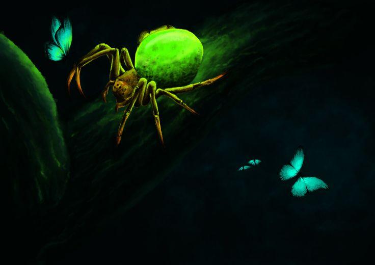 Araignée concombre