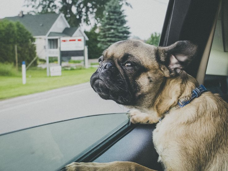 139 best pugs images on pinterest pug dogs pug and pugs puggy you a song you make me wanna roll my windows down and crusie thecheapjerseys Gallery