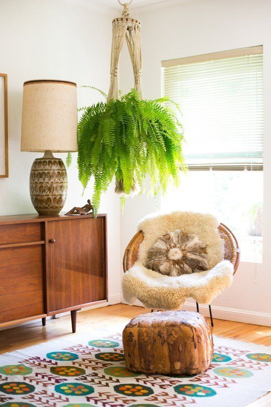 "Boston Fern. Great hanging plant and can give some serious visual impact to a room. This plant can be a statement piece, but is a little ""diva-ish"" in the watering and pruning department. The plant needs indirect sun and a humid environment. The Boston fern is also known to be one of the best air purifiers in the plant world. Here is the best explanation I could find on how to care for this plant - http://www.wikihow.com/Care-for-Boston-Ferns"