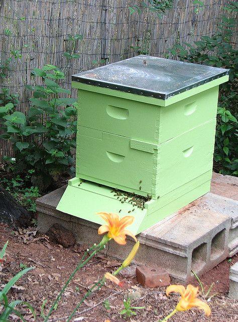 beekeeping - how to get started | protractedgarden