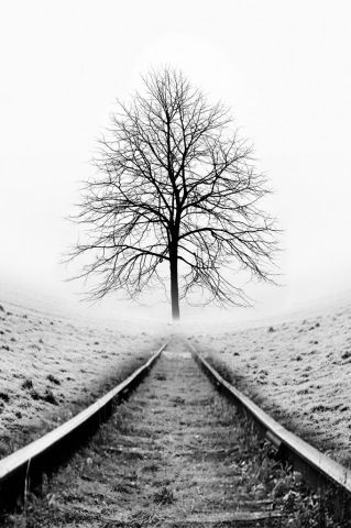 Black and white photography | Mono photos | Tree at end of the track | Photo Composition