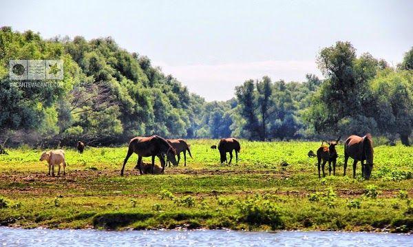 @Delta Dunării, #vacantainRomania
