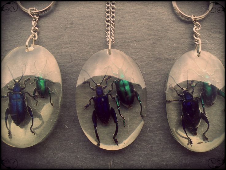 Collier ou porte-clés couple d'insectes chrysomèle grenouille (femelle et mâle Sagra Femorata) : Collier par neckromantic