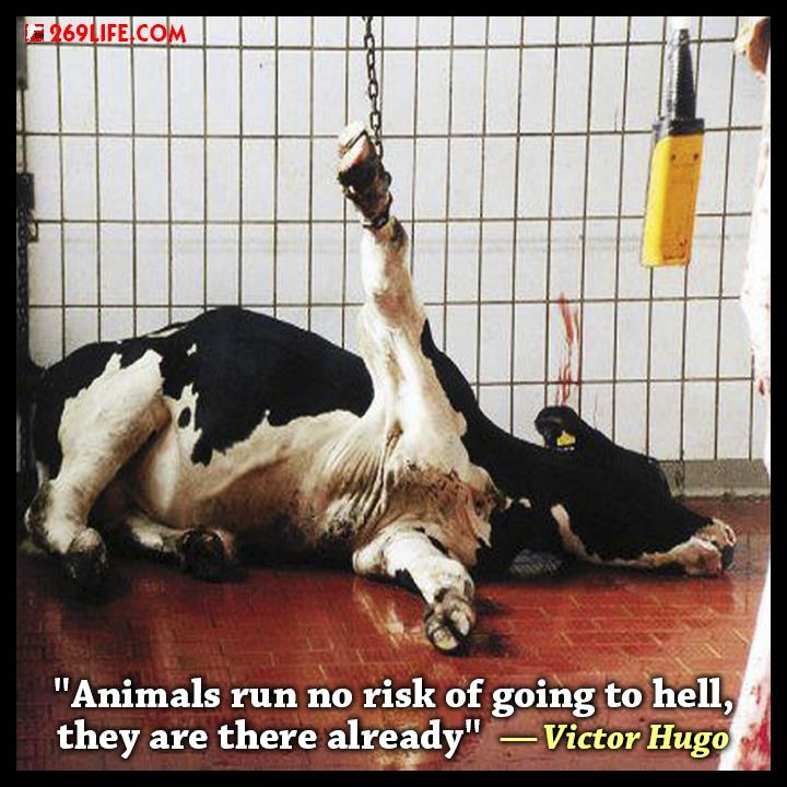 209 best images about go vegan on pinterest dairy