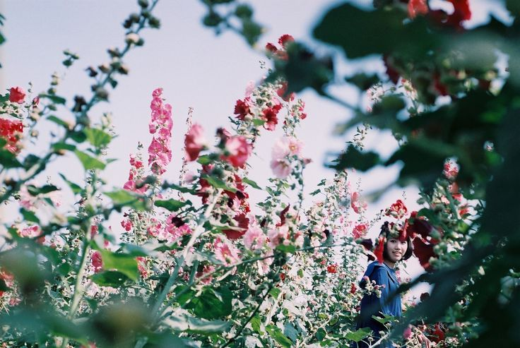 yaek. (floralls:     by Hsien hui Tsai)